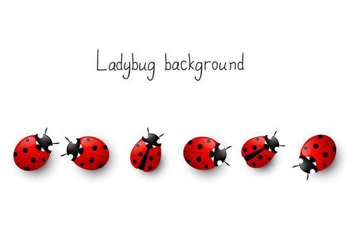 Ladybugs border