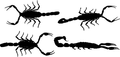 four black isolated scorpions
