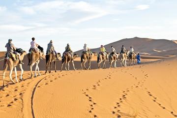 Camel caravan going through the sand dunes in the Sahara Desert,