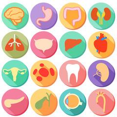Internal organ and Body Parts