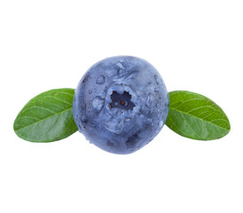 Blueberry in Close-Up
