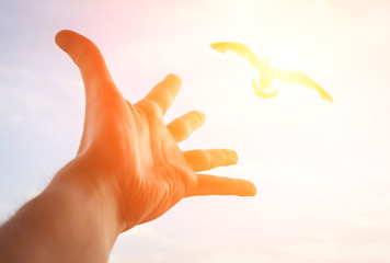 Hand of a man reaching to bird in the sky. Focus on a hand.