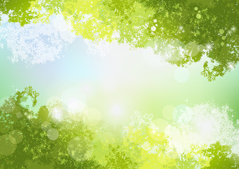 空 初夏 背景 新緑 自然 Fresh Spring Green background with soft sun light
