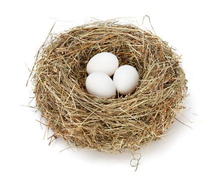 White eggs in nest