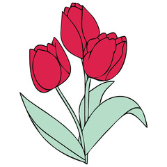 tulips vector drawing