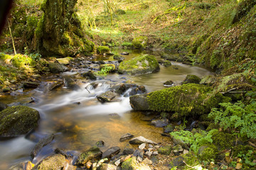 a river in forest , in brittany