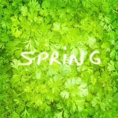 Fresh parsley background