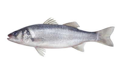 Foto auf AluDibond Fisch fish seabass Isolated on the white background