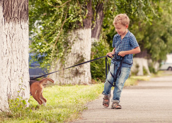 Wall Mural - Little boy walking his puppy