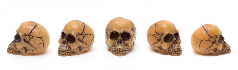 skulls from five perspectives