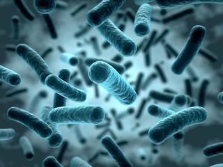 Bakterien 3D