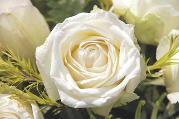 rose color cream