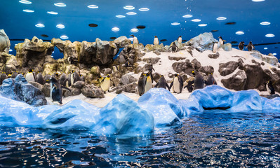 Group of emperor penguins playing in the snow