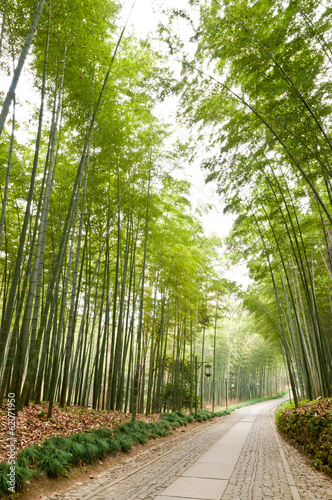 Bamboo Forest Trail In Hangzhou China Stock Photo And Royalty Free