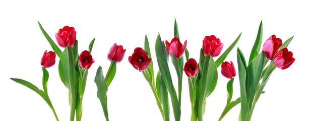 Red horizontal tulip banner
