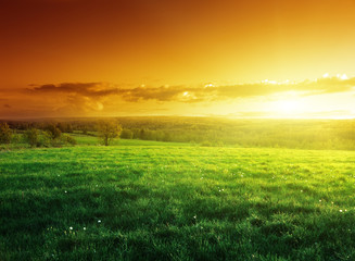 Canvas Prints Honey field of spring grass in sunset time