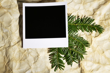Beautiful yew twig and empty photo paper on old paper