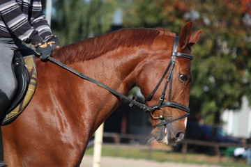 Chestnut horse portrait with rider
