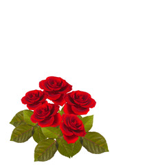 five red roses on a green stem with leaves isolated