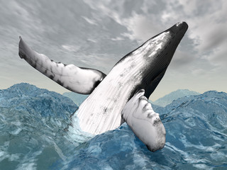 Humpback Whale in the stormy ocean