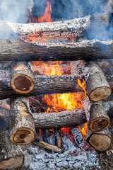 Burning firewood in the fire closeup
