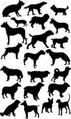 twenty two black isolated on white dogs