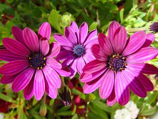 fleur flore