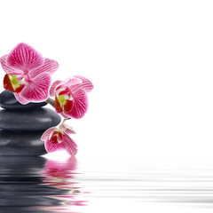 orchid flower in closeup with reflection in water