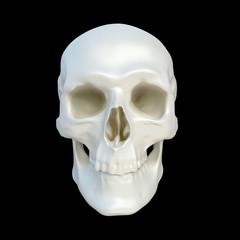 human skulll