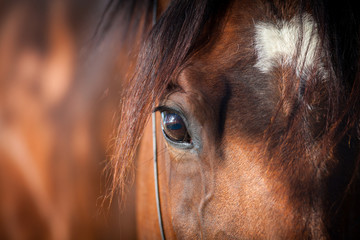 Eye of bay horse closeup