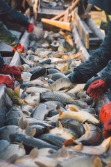 The workers in the fishing industry sorted fish