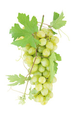 Fresh ripe grapes