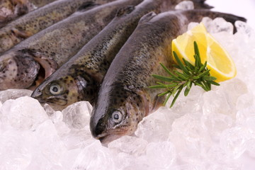 Fresh rainbow trout with lemon on ice