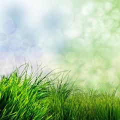 Frühlings-Hintergrund: Grünes Gras mit Bokeh :)