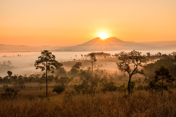 savanna with sunrise and fog Wall mural