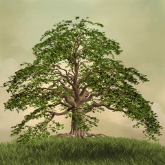 Enchanted nature series - The green tree