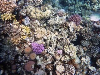 Tauchen am Korallenriff