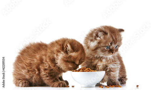 What food to feed older cats