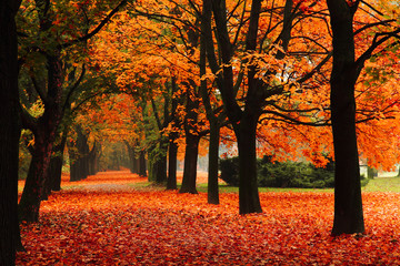 Aluminium Prints Orange Glow red autumn in the park