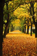 orange autumn in the park