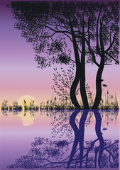 silhouettes of trees by the lake at sunset