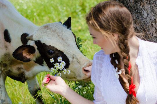 Young pretty woman feeding cow calf