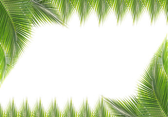 Green coconut leaves frame isolated