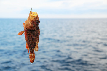Red Rock Sea Fish