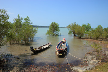 Fishing boat moored in the mangroves