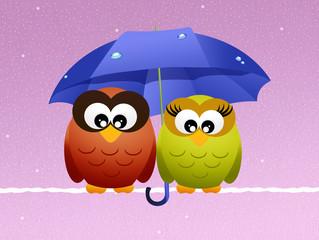 owls with umbrella