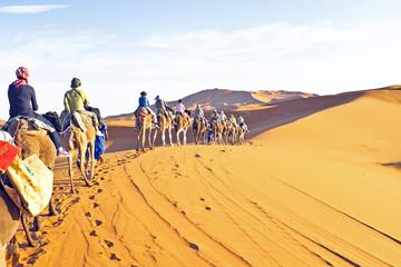 Camel caravan going through the sand dunes in the Sahara