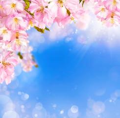 Kirschblüten Hintergrund mit Lichteffekten