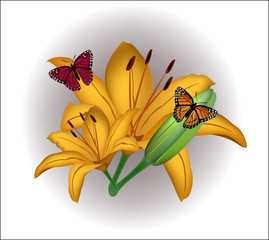 Yellow lily with butterflies