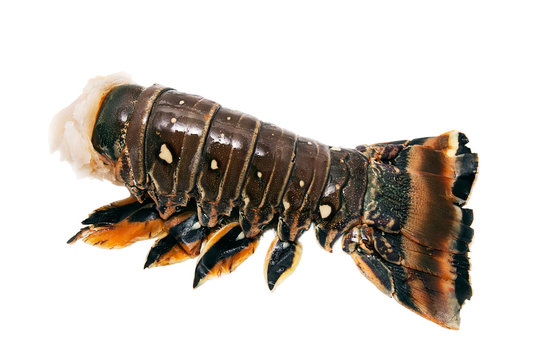 Spiny lobster tail